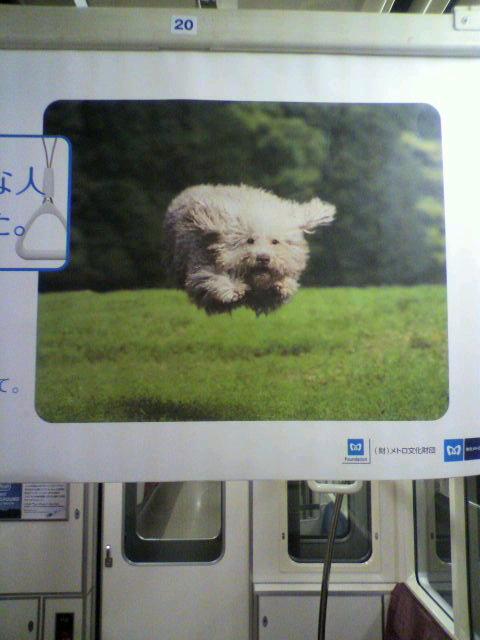 電車中吊り広告